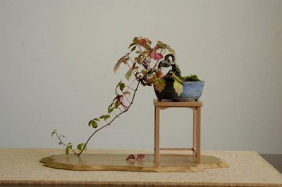 crawling bonsai