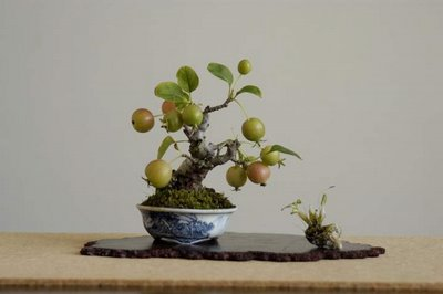 bonsai on table