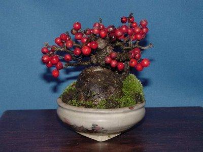 fruited bonsai