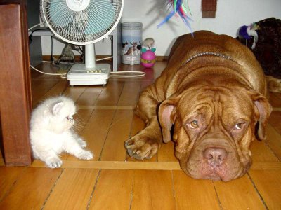 cat and dog friend