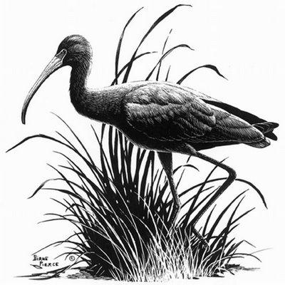 Diane Pierce - Duck Drawing Pencil Art
