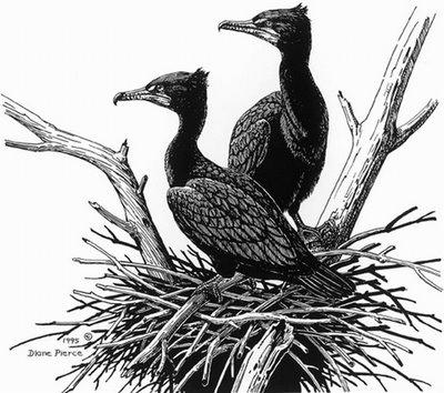 Diane Pierce - Cool Bird Drawing Pencil Art