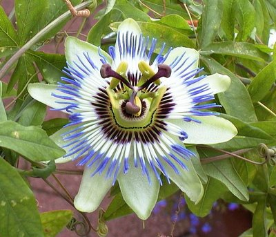 alien look like flower