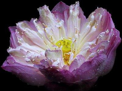 uncommon flower