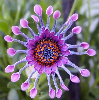 very bright color flower
