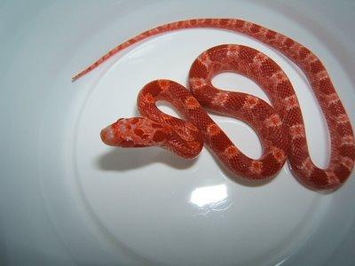 bite snake