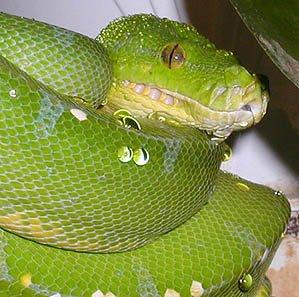 conspiracy river snake