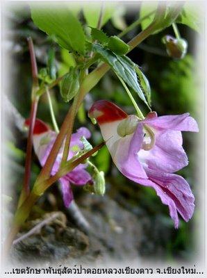 flower garden, orchird