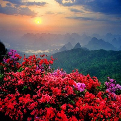 flowers glooming in China