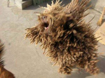 bob marley rastafarian dog