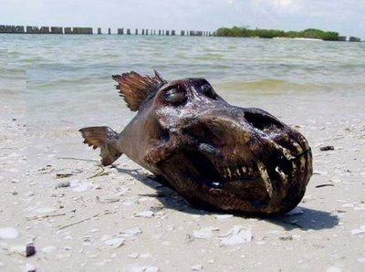 weird fish with sharp jaw breaker found at sea side