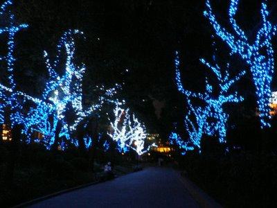 beleuchtete Bäumchen