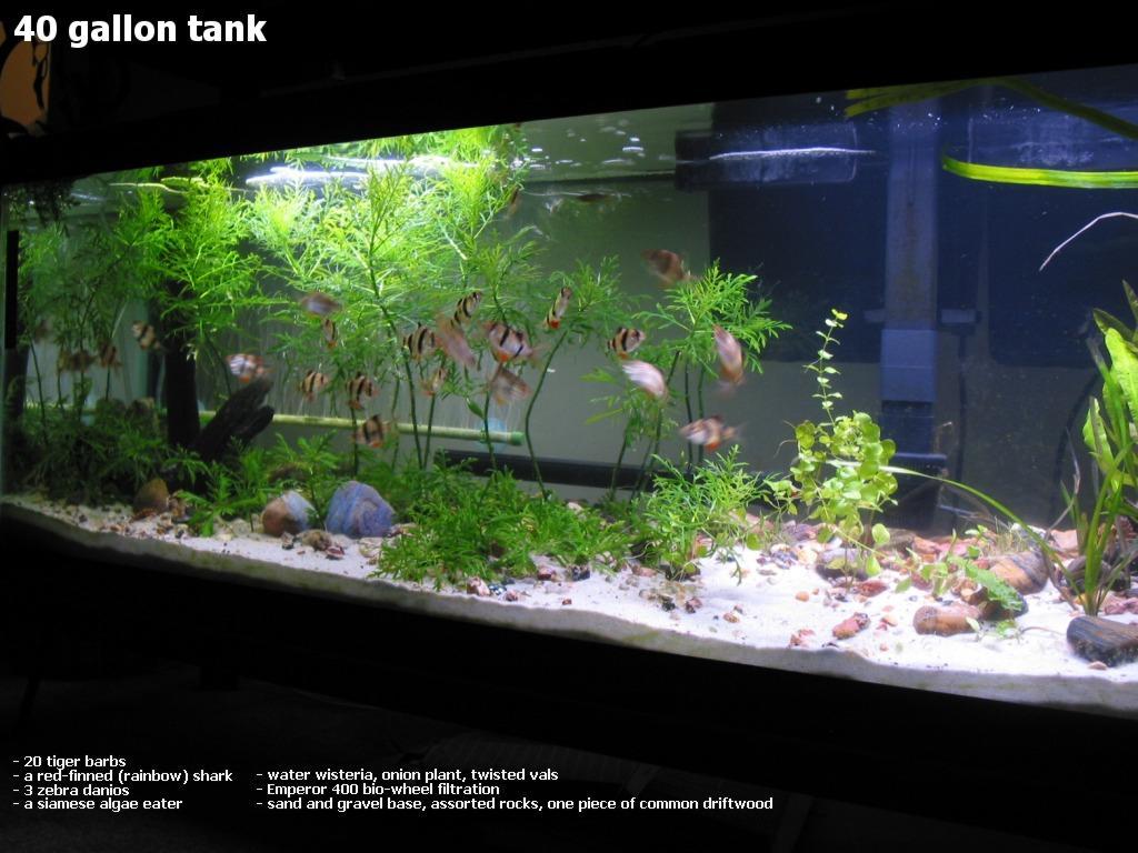 Fish tank 40 gallon gallon aquarium and stand 60 gallon for Gallon fish tank