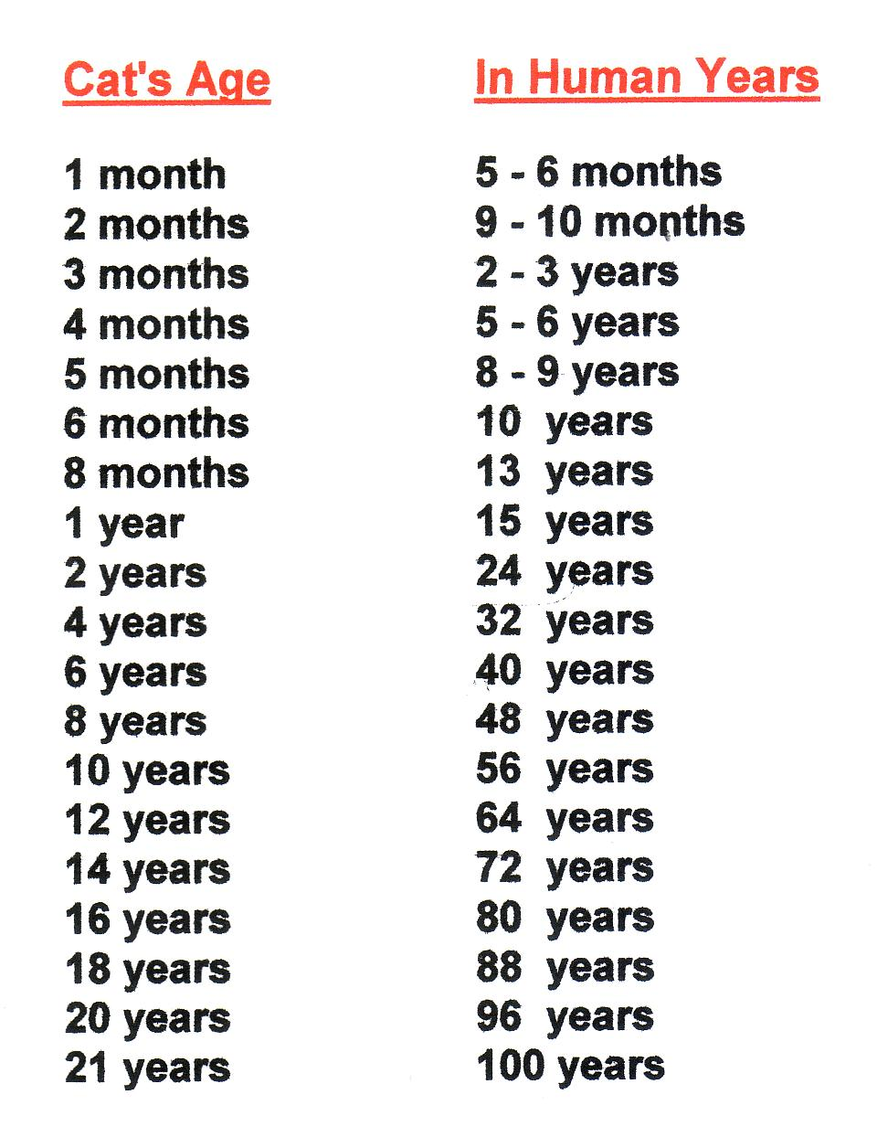 Cat To Human Years Conversion Chart
