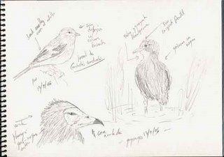 The Juveniles Birds
