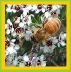 Honey medicinal uses pdf