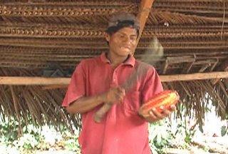 huallaguino con cacao
