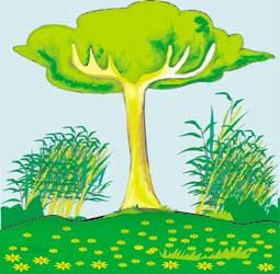 A árvore orgulhosa - Por Bérgson Frota / Fortaleza