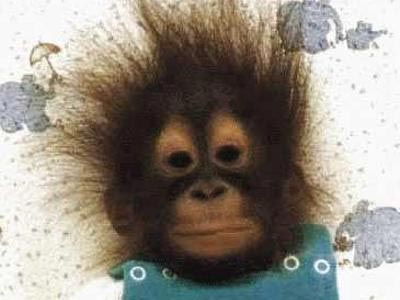 Funny Looking Monkey - Funny Picture