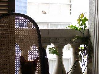 <br />Snarf espiando o gato da vizinha na janela.