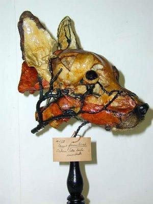 La cabeza de un perro, así como lo oyen.