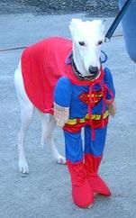 Supermann Windhund