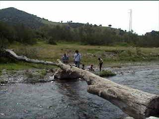 tronco sobre el rio genal