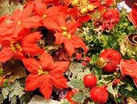 Poinsettias by Brian Davis Online Pixelperfect.com