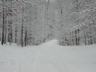 Snowy Path (C) DByrd Manassas, VA