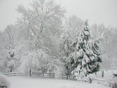 February Snowstorm (c) Dbyrd