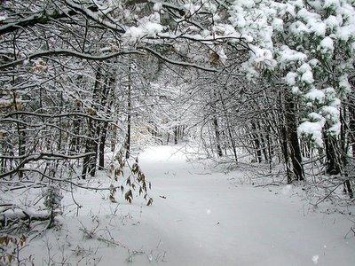 Snowy path, February 2005