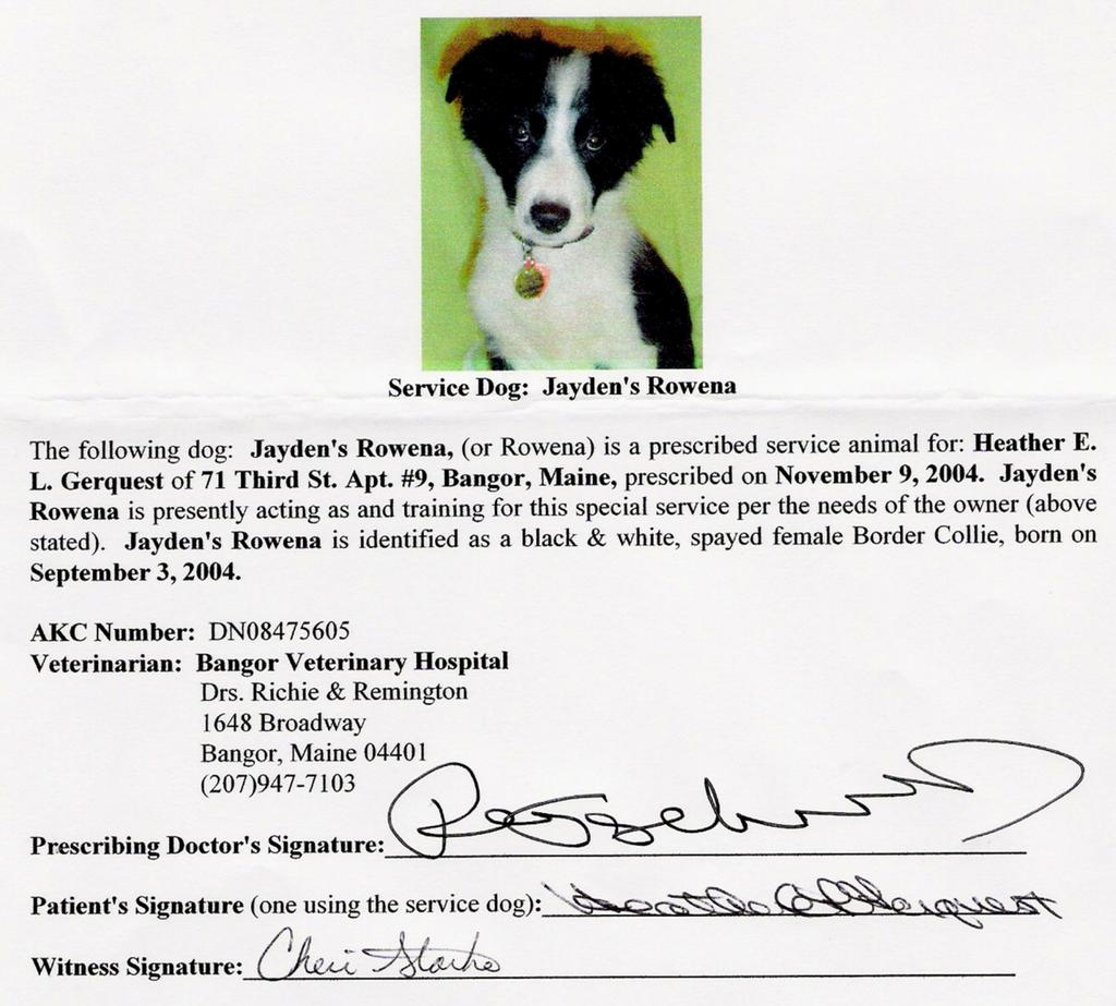 My border collie rowena trials tribulations of a for Service pet letter