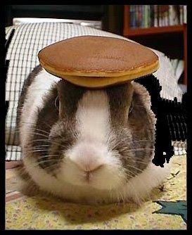 Sundays Rabbit With A Pancake On Its Head
