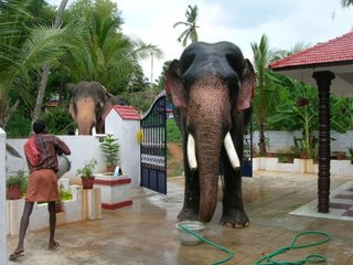 Elephants taking bath at our house...