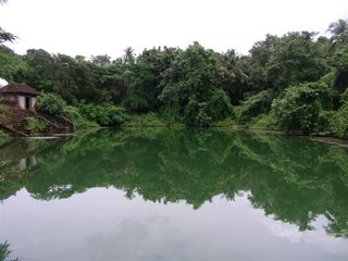 A beautiful pond near our temple...