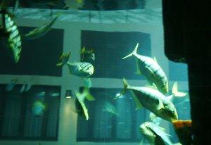 Berlin AquaDom SeaLifeCentre