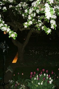 Britzer Garten Tulipan-Nacht