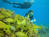 Scuba diving on coral reef, courtesy of 'Luist & his inner pig' at Flickr.com under Creative Commons License
