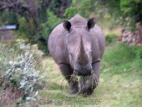 Photo: Rhinoceros, Masai Mara, Kenya safari wildlife