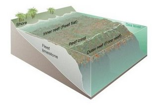 Diagram of a fringing coral reef, like that on the Kenya coast