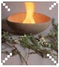 Click aqui y a explorar sobre el Espiritu de las plantas de poder.
