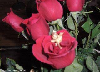 El Hada de las Rosas.
