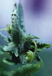 Elemental de una Planta de Poder
