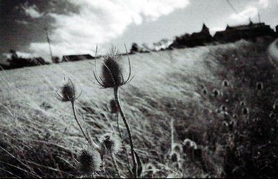 Foto de Robin Davies