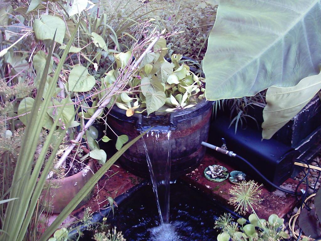 how to keep a backyard pond clean
