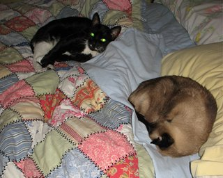 Chatham and Salem sleep in Cat Couch/Dad's bed