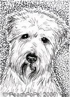 Wheaten Terrier Dog arT card