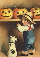 dog looking at pumpkins