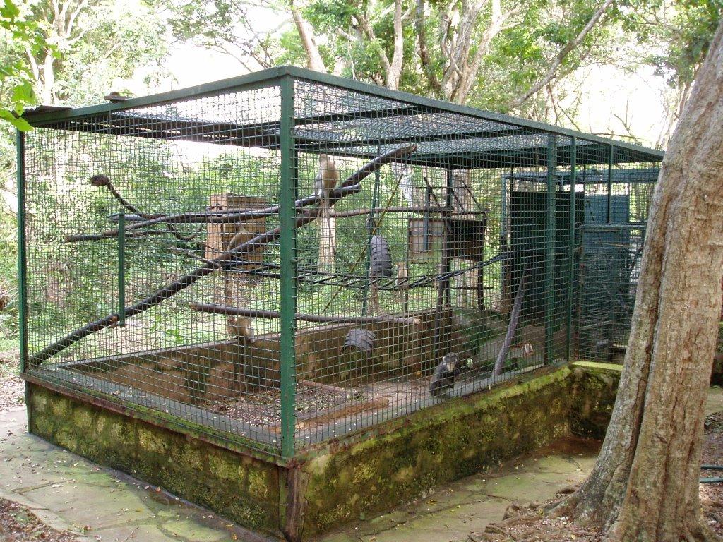 Den okanda apburen! Har vistas beslagtagna fore detta husdjursapor som ska  ateranpassas till ett liv i det vilda igen. Det har ar platsen dar bensaret  ... 764e435eefcc1