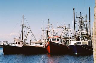 Boats docked in Menemsha